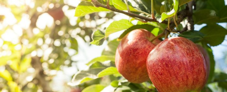Apple-Orchard-1500x609